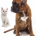 dog-and-white-cat-photo